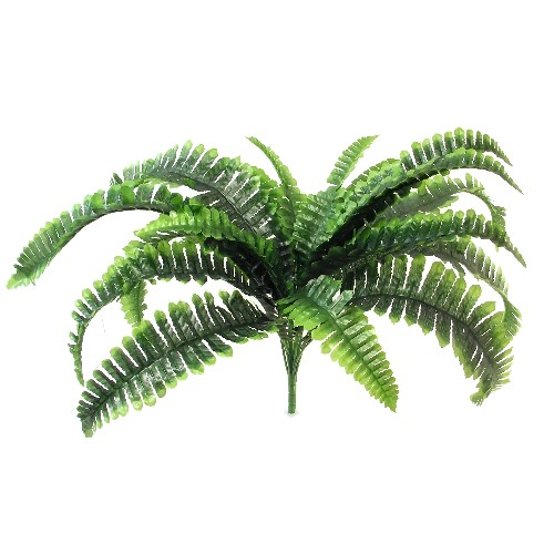 Large Boston Fern Bush 870002