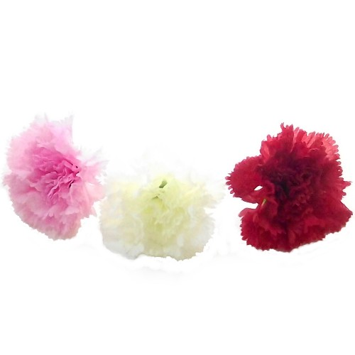 Carnations Loose Flower Heads