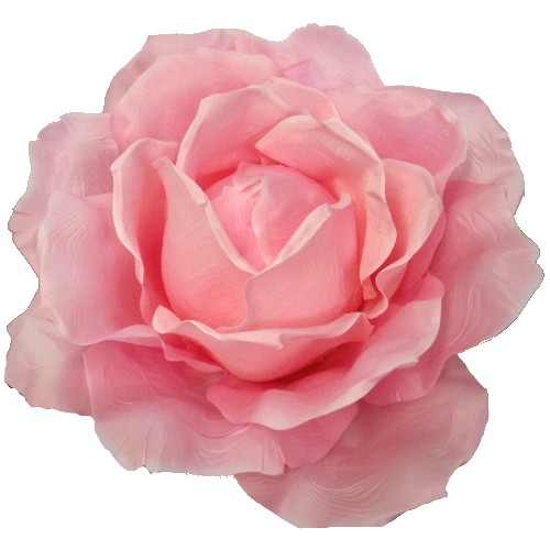Pink Giant Rose 876031