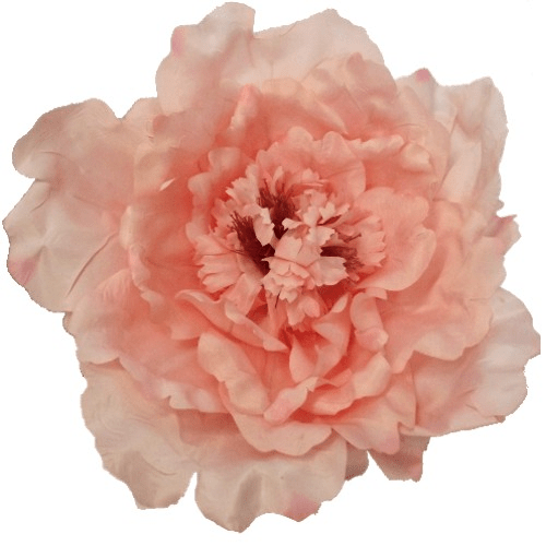 Pink Extra Large Peony 876116